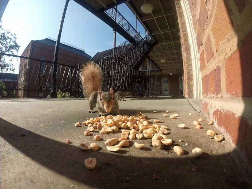 squirrelsnip