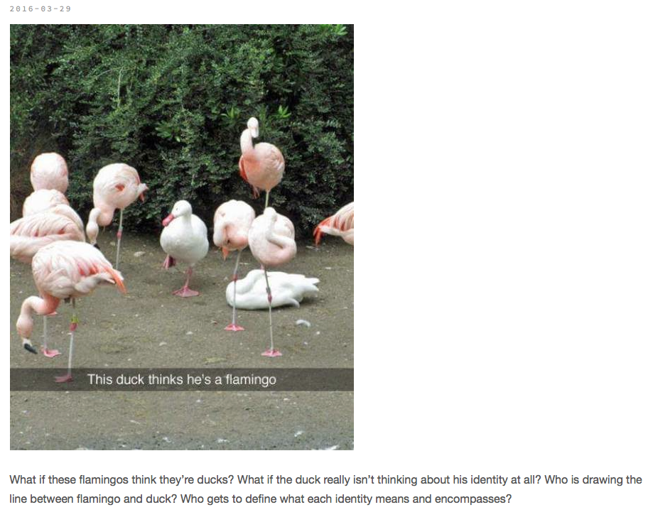 duck flamingo